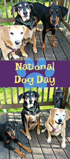 Learn more about National Dog Day Mom | Rescue Dog | Life with Dogs | Dog Products