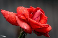 Teresa Fndz Photography:  A cor num dia cinzento de chuva