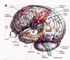 El ser humano es un complejo ordenador, que dispone de varias memorias, cada una con un manejo de la información diferente, y desecho de la misma cuando se necesite. Disponemos de varios tipos de memoria: 1. Almacén de memoria sensorial (A.M.S); 2. Memoria de corto plazo (M.C.P); y 3. Memoria a largo plazo (M.L.P).