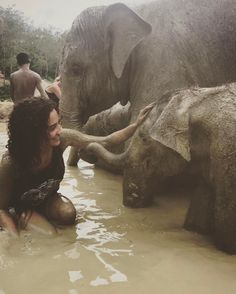 Spent the day taking a #mudbath with the #elephants #elephantjunglesanctuary #Phuket #Thailand