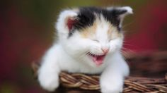 A picture of my cat at the laughing time.. http://ift.tt/2jxM2od