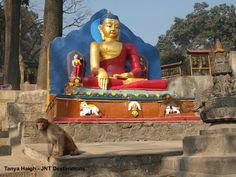 #Monkey #Temple #Kathmandu #Nepal Nepal, Monkey, Temple, Buddha, Destinations, Statue, Painting, Art, Art Background