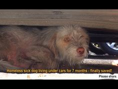 Homeless sick dog living under cars for 7 months - finally saved!  Pleas...