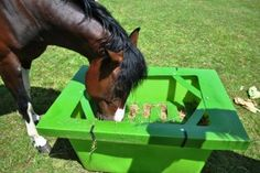 Slow Feeders for Horses - The Hay Saver Horse Slow Feeder, Hay Feeder For Horses, Horse Hay, Two Horses, Dream Barn, Clever Design, Pony, Colours, Animals