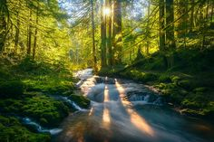 Spring in the Ancients (Washington) by Exploring Light / 500px