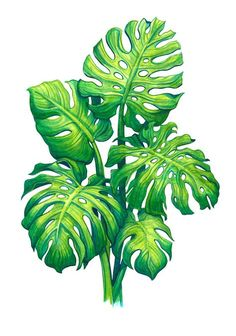 Monstera Art Print by Sanjana Baijnath