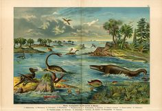 """Schubert's take on the classic Jurassic scene, with plesiosaurs and ichthyosaurs galore. From """"Naturgeschichte des Thierreich"""" 1880's. All these lithograph images taken from ebay. HD"""