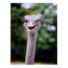 Funny Ostrich Postca
