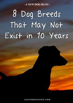 Such beautiful dog breeds, it would be a shame! http://theilovedogssite.com/8-breeds-that-may-not-exist-in-ten-years/