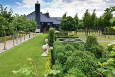 To the left is a classic lime walk of pleached lime trees (Tilia cordata)…