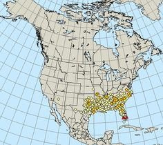 Hummingbird migration map