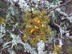 Orange lichen on a tree branch