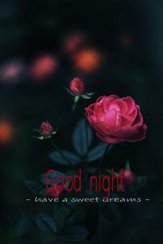 Romantic Good Night, Good Night Love Images, Cute Good Night, Good Night Messages, Good Night Wishes, Good Night Sweet Dreams, Good Morning Good Night, Good Night Quotes, Good Morning Images