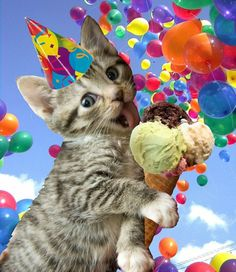 first birthday balloons Birthday Posts, Cat Birthday, Animal Birthday, It's Your Birthday, Birthday Memes, Birthday Blessings, Birthday Wishes Cards, Birthday Messages, Happy Birthday Pictures