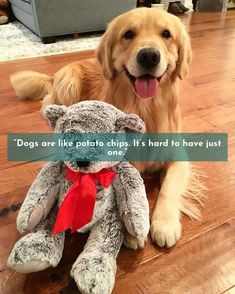 """""""The average dog is a nicer person than the average person."""" #goldenretrievers #lovegolden"""