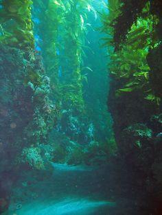 Kelp Forest Underwater Channel Islands, CA Underwater Pictures, Underwater Art, Underwater Photography, Nature Photography, Water Aesthetic, Aesthetic Art, Channel Islands National Park, Kelp Forest, Sombre
