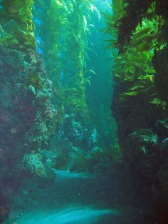 Channel Islands, CA    A diving destination I can't wait to go to one day!