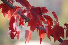 Autumn...eye candy!