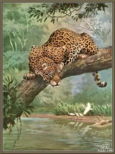 Your place to buy and sell all things handmade - National Geographic – Jaguar – Wild Animal Print – 1963 Vintage Book Page – 7 x 10 - Animals And Pets, Funny Animals, Cute Animals, Wild Animals, Baby Animals, Big Cats Art, Cat Art, Wildlife Paintings, Wildlife Art