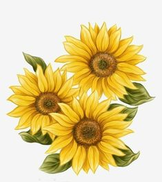 Tumblr - Girassóis - Wattpad Sunflower Png, Sunflower Drawing, Sunflower Pictures, Watercolor Sunflower, Sunflower Tattoos, Watercolor Flowers, Watercolor Paintings, Daisy Drawing, Sunflower Clipart