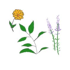 Herbal Tea Collection @  www.anniesheirloomseeds.com