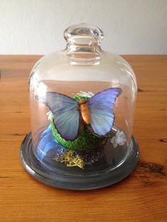 Butterfly mini terrarium H x W Terrarium For Sale, Mini Terrarium, Snow Globes, Fairy, Butterfly, Ornaments, Gifts, Facebook, Home Decor