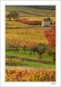 Rhone Alpes, Lucenay, France