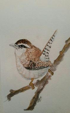 Wren watercolor painting by Brenda Sauve