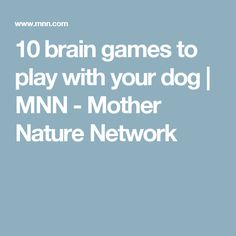 10 brain games to play with your dog   MNN - Mother Nature Network