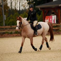 """""""Hi I'm Shelby I'm 11 and I have been riding since I was 2 I love jumping and I'm here for some lessons I ride this roan Welsh pony scarlet I'm hoping there's some lesson horses I can upgrade to at the moment"""""""