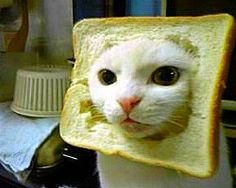 """the sad reality of in-bread cats...""  saw a cat face in my toast"
