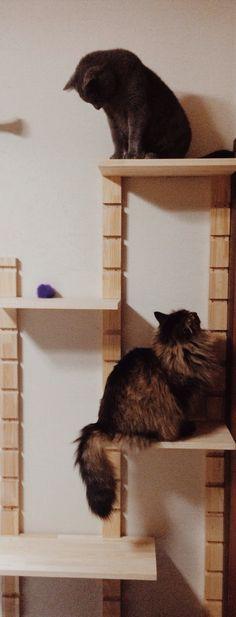 DIY Cat Tower/Climbing Structure