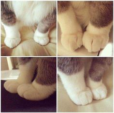 These Cute Paws.