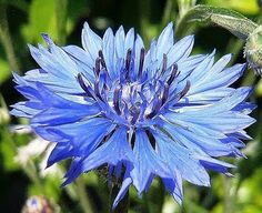 love this Cornflower color