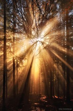 ~~Autumn Light ~ crepuscular rays in the forest, Germany by Kilian Schönberger~~