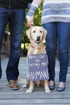 Announcements: Dog getting humans. Funny and Unique Baby Announcement Pictures Unique Baby Announcement, Baby Announcement Pictures, Pregnancy Announcement Dog, Funny Pregnancy Announcements, Baby Surprise Announcement, Pregnancy Announcement To Husband, Baby Kind, Baby Love, Baby Baby