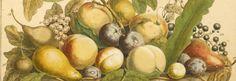 Robert Frurber's Twelve months of Fruit, 1732