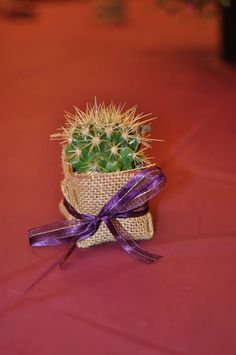 Wedding shower succulent favor with a cute little Golden Barrel Cactus. TheSucculentSource