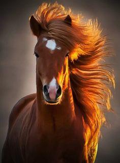 6.) This hair-raising horse.