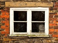 "Gandalf the Great Grey Owl gets scared flying out in the open so his owners have built his aviary inside a brick shed.     He now spends his days watching the world go by out of his window.    ""He is a bit of a wuss as he doesn't like flying in big open spaces,"" said owner Janet Southard, who runs the Wild Arena photography company, based inside Knowsley Safari Park near Liverpool."