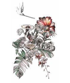illustration fanny casau crane.jpg - Fanny CASAU | Virginie