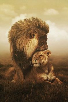 $5.95 - Lion And Lioness Serpia Art Image Poster Gloss Print Laminated #ebay #Collectibles