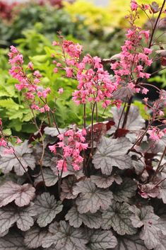 Indoor Flowering Plants, Garden Plants, Coral Bells Heuchera, Kangaroo Paw, Blue Poppy, Queen Annes Lace, Lily Of The Valley, Growing Vegetables, Flower Beds