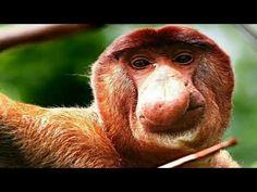 Wildlife, Monkeys, Youtube, Animals, Rompers, Animales, Animaux, Monkey, Animal