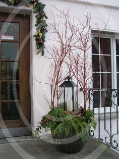 Advent-Pflanzen - www.chopard-blumen.ch Chopard Blumen Blumengeschäft Fleuropservice Gärtnerei Ins