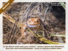 Kunst vom Feld: Medusa – www.kunstvomfeld.de