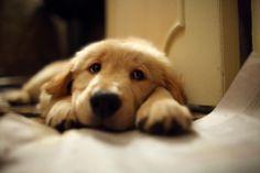 love that cute little face!!!!