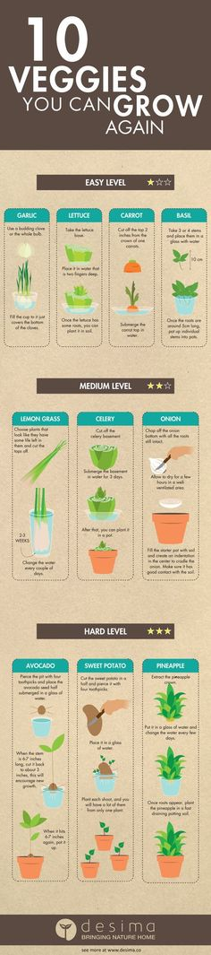 10 vegetables you can grow from scraps! Serve fresh vegetables & spices everyday with these easy DIY garden guides! Diy Gardening, Gardening For Beginners, Organic Gardening, Container Gardening, Vegetable Gardening, Flower Gardening, Veggie Gardens, Gardening Gloves, Hydroponic Gardening