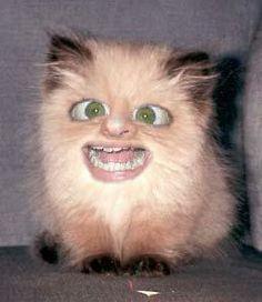 Moppentap: Grappige plaatjes -Gekke kat