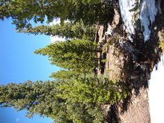 Camping Pike National Forest Jefferson, Colorado    https://www.facebook.com/media/set/?set=a.346370422088631.80178.342208075838199=3    http://en.wikipedia.org/wiki/Pike_National_Forest